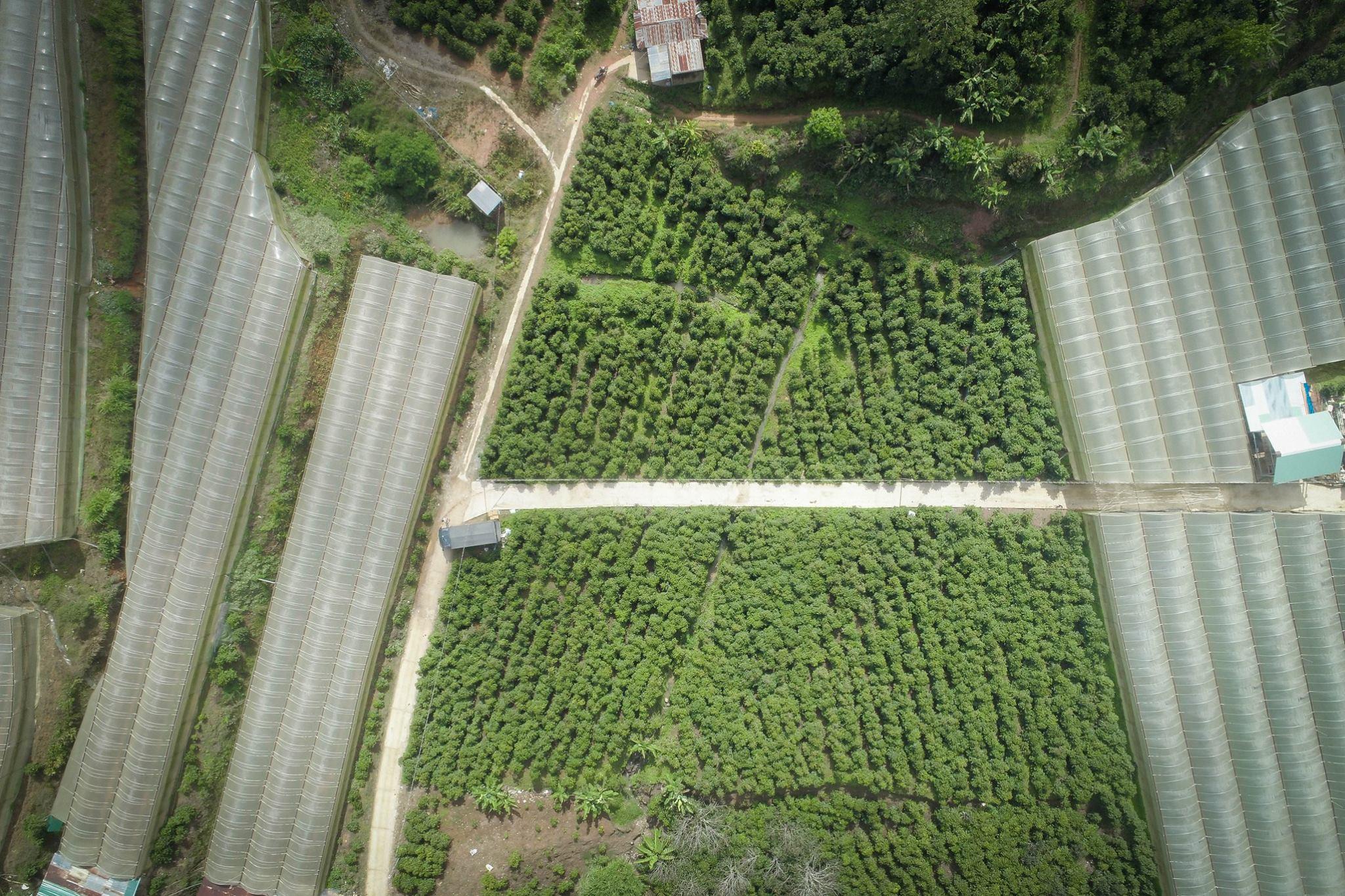 Nông trại cà phê HANCOFFEE tại Cầu Đất - Đà Lạt - Lâm Đồng
